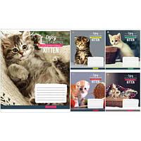 Тетрадь в клетку 12 листов794519«Kittens Funny Moments» Зошит Украины