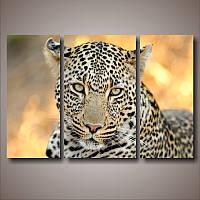 "Модульная картина ""Леопард. Триптих"""