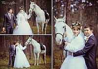 Прогулки на лошадях по лесу, фото 1