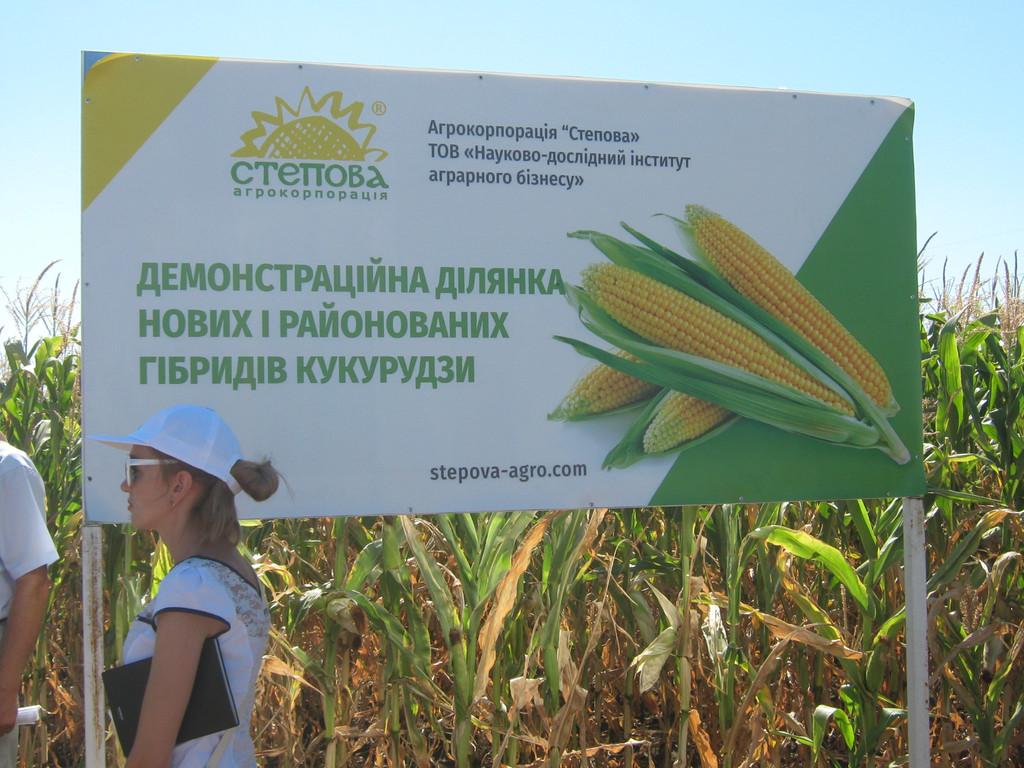 Полевой семинар по кукурузе июль 2017 г