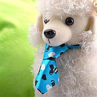 Ошейник галстук для собаки голубой