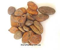 Какао-бобы 500 грамм, плоды шоколадного дерева
