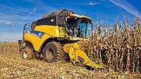 Вести с полей: встречаем новый урожай кукурузы