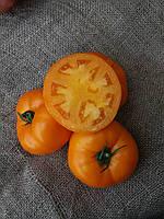 Томат Айсан F1 Kitano Seeds 1000 семян, фото 1