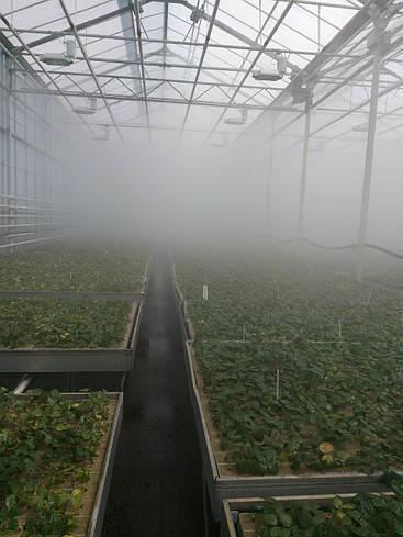 Система туманообразования для теплиц, система туман, установка туманообразования высокого давления