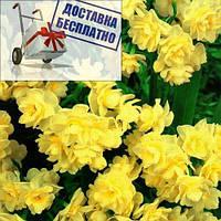 Луковичное растение Нарцисс мультицветковый Golden Rain