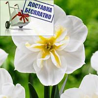 Луковичное растение Нарцисс сплит Lemon Beauty