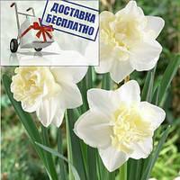 Луковичные растения Нарцисс корончатый с махровый короной White Marvel