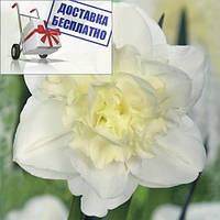 Луковичные растения Нарцисс махровый  Obdam, фото 1
