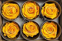 Роза Стандарт 6гол. желтый