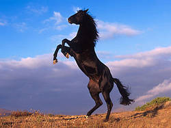 Эффективность использования препарата «Хионат» фирмы Байер АГ в работе с заболеваниями суставов лошадей