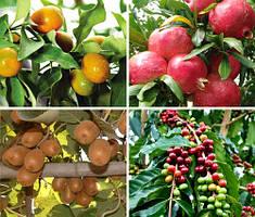 Плодовые и цитрусовые