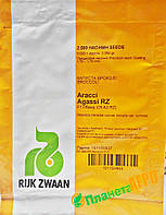 Семена капусты брокколи Агасси F1, 2500 семян RZ (Рийк Цваан), Голландия