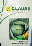 Семена капусты Бригадир F1, 2500 семян, Clause (Клоз), Франция