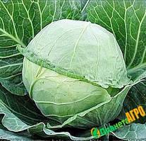 Семена капусты белокочанной Украинская Осень, 0,5 кг, Anseme (Ансем), Италия