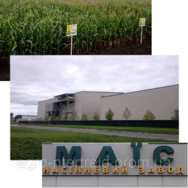 Семена кукурузы гибрид Платинум  ФАО 340