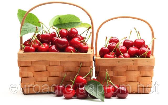 Первый аппарат для сортировки вишни