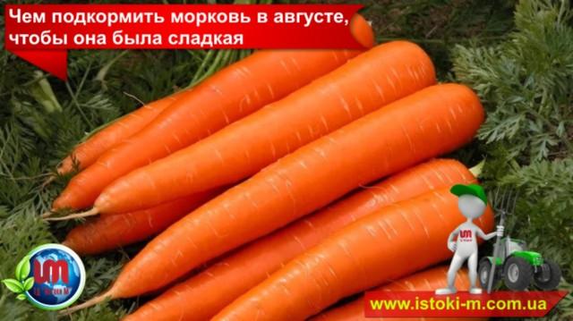 подкормка моркови_как сделать чтобы морковь была сладкая_органическое земледелие_органическое удобрение для подкормки моркови_подкормка овощей