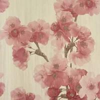 Sakura BN 18581