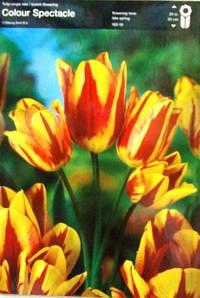 Тюльпан багатоквітковий Colour Spectacle