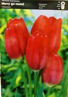 Тюльпан багатоквітковий Merry go round