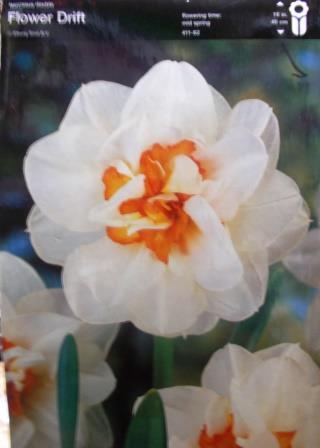 Нарцис подвійний Flower Drift