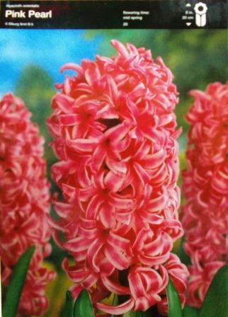 Гіацинт Pink Pearl