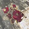 Сатин с крупными бордовыми цветами на песочном и хаки фоне, ширина 220 см