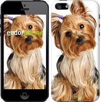 """Чехол на iPhone 5s Йоркширский терьер с хвостиком """"930c-21-4848"""""""
