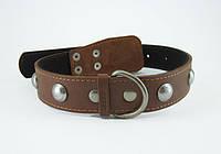 Ошейник для собак COLLAR с синтепоном и украшениями 35мм/48-63см 02776, коричневый