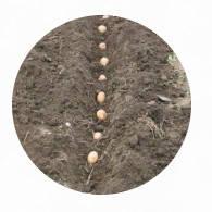 Техника для посадки картофеля. Техніка для садіння картоплі.