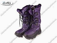 Женские сапоги фиолетовые (Код: ЖББ-02)