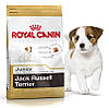 Корм для щенков породы джек-рассел-терьер Royal Canin Jack Russell Terrier Junior