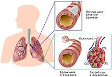 Лікування простудних захворювань з БАД НСП. Відгуки.