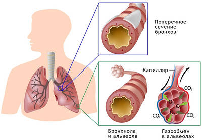 Лечение простудных заболеваний с БАД НСП. Отзывы.