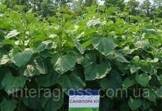 Купить Семена подсолнечника Санфлора