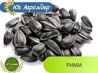 Семена подсолнечника РИМИ (вегетация 108-112дн.) Юг Агролидер, толерантный к Евро-Лайтингу
