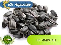 Семена подсолнечника НС ИМИСАН (вегетация 110-112дн.) Юг Агролидер, толерантный к Евро-Лайтингу