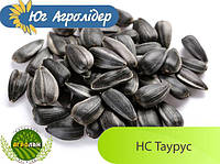 Семена подсолнечника НС Таурус (вег.109-113дн.) Юг Агролидер, толерантный к Евро-Лайтингу