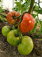 Семена томата Розалба 250 шт