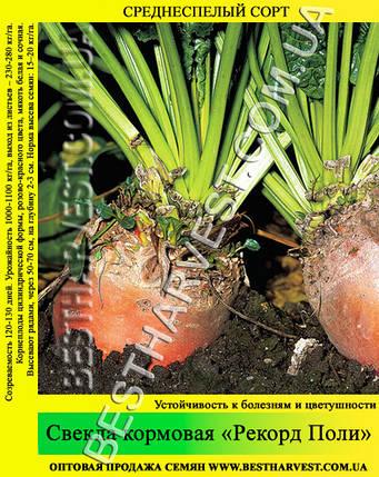 Семена свеклы «Рекорд Поли» 1кг, фото 2