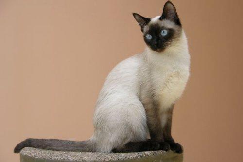 Новый подход к лечению идиопатического, или интерстициального, цистита кошек