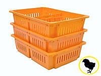 Ящик для перевозки суточных цыплят на 2 отделения