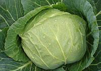 Выращиваем позднюю капусту.