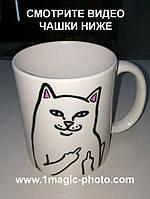 Чашка мем кот с факами кот рипндип