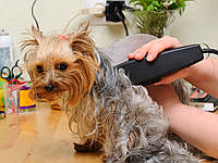 Машинка для стрижки собак и котов Surker HC-585 Pet Hair Clipper с 6 насадками