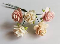 Open Roses Rose