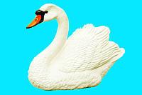 Лебедь малый белый