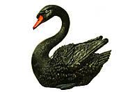Лебедь малый черный