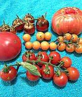 Набор томатов №1